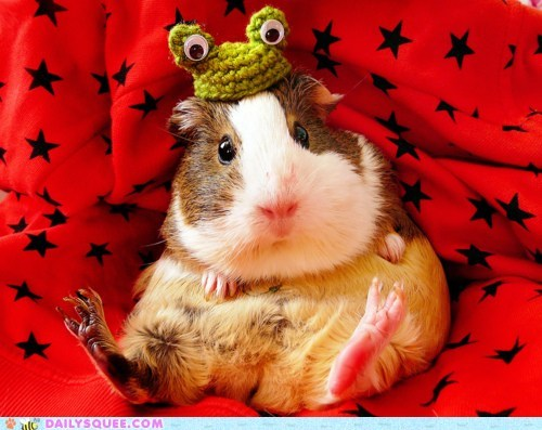 frog guinea pig Hall of Fame hat pose stars - 5902803456