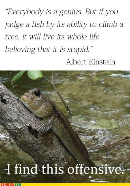 albert einstein,best of week,fish,genius,Memes,offensive,the internets,ur a genius