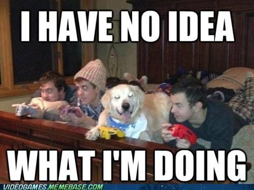 animal dogs meme nintendo 64 no-idea-what-im-doing rover