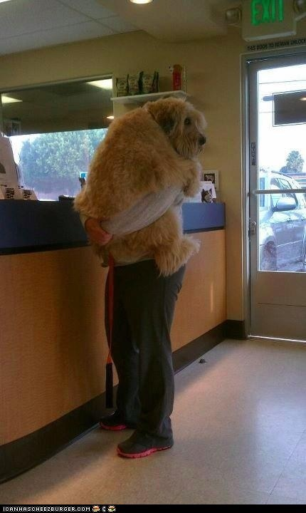 arms dogs goggies hugs lol scared vet vets