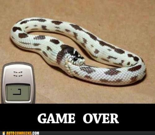 game,nokia,ouroboros,snake