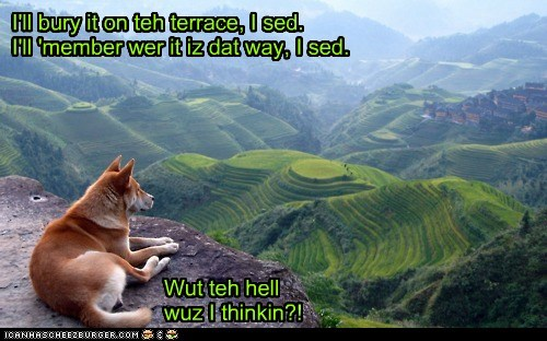 bad idea,forgetful,forgot,forgotten,remember,shiba inu,terrace,what the hell
