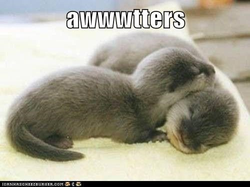 asleep aww baby cute otters portmanteaus sleep squee