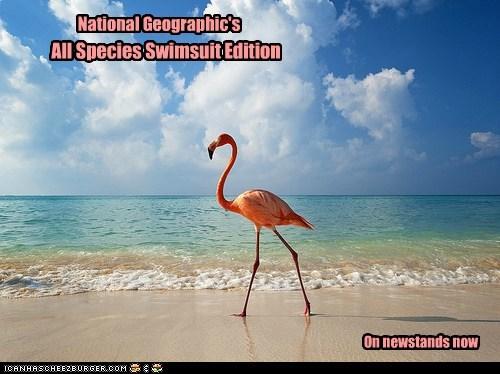 beach flamingo model ocean pink sexy - 5904653568