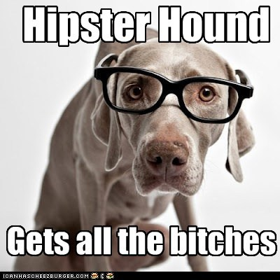 Hipster Hound Gets all the bitches