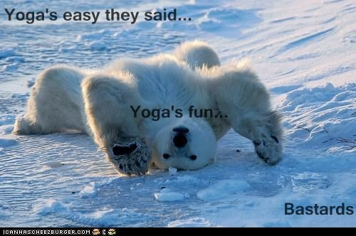 arctic bear best of the week fitness nope not fun polar bear polar bears upside down yoga - 5905086464