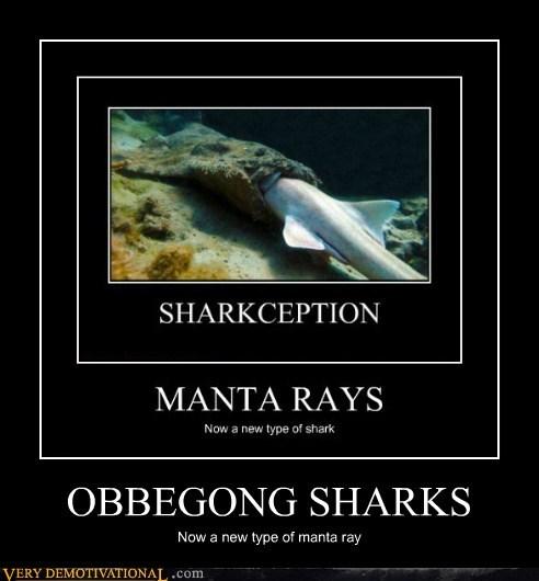 idiots manta ray obbegong sharks wtf - 5905108992