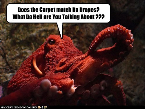 cephalopod,does the carpet match the drapes,octopus,red,red hair,redhead
