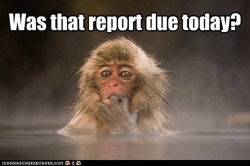 assignment,bath,hot tub,Japan,monkey,paper,school,snow monkey,warm,water