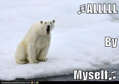 bear lonely Music polar bear singing song - 5905685760