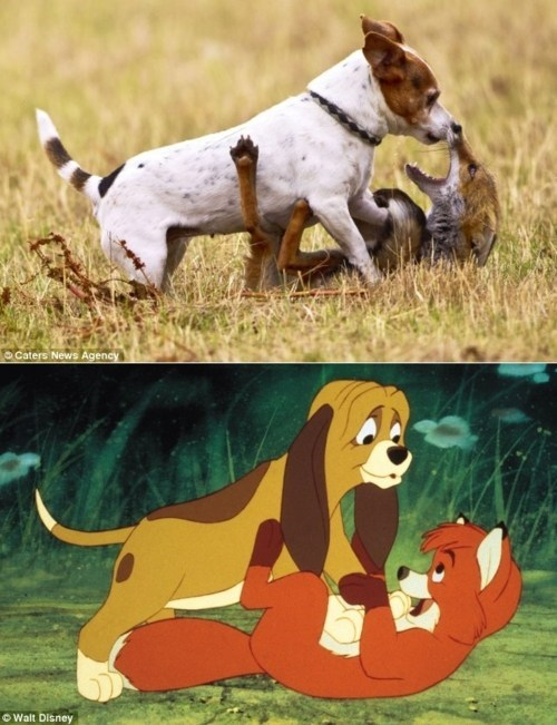 Disney IRL interspecies interminglin the fox and the hound - 5905950720