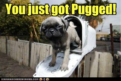 best of the week cyoot funny Hall of Fame pug - 5906133760