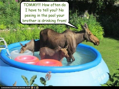 TOMMY!!! How often do I have to tell you? No peeing in the pool your brother is drinking from!