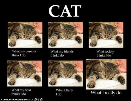 best of the week Cats Memes multipanel sleep sleeping what I really do what people think i do - 5906219776