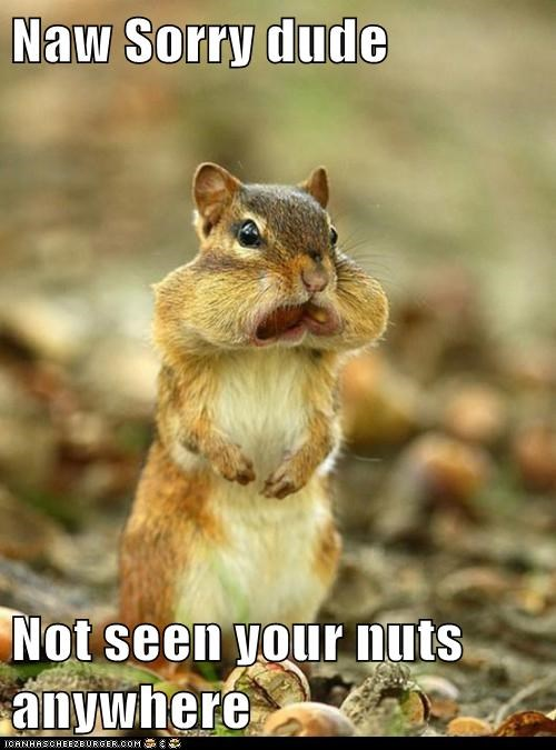 cheeks chipmunk food full nom nuts rodent stuff - 5906368000