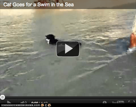 around the interwebs Cats ocean people pets sea swim swimming Video - 5906420736