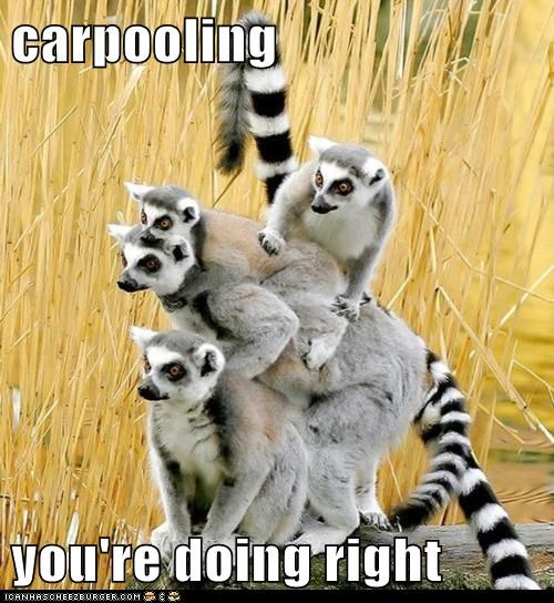 carpooling efficiency lemurs youre-doing-it-right