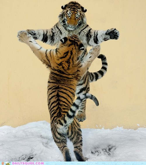 dance,jump,snow,tigers
