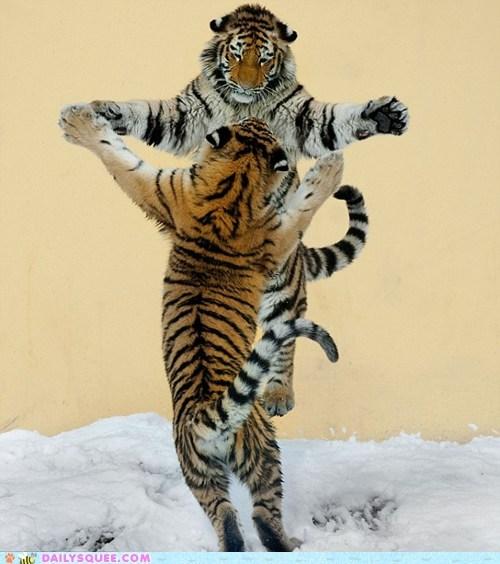 dance jump snow tigers - 5906990336