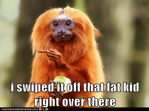 fat kid,monkey,over there,pointing,red hair,stealing,swiped,tamarin