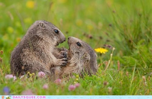 field flowers grass love meadow Prairie Dogs - 5907118848