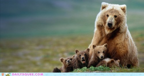Babies bears cubs family mom pose - 5907126528