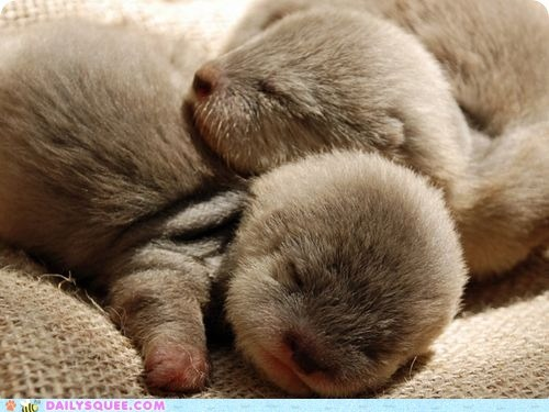 Babies cuddle otters sleepy snuggle - 5907130880