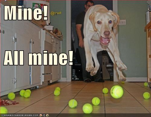 dogs funny toys weimaraner - 5907197440