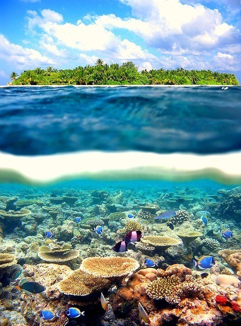 coral,coral reef,getaways,ocean,reef,swim,swimming,Tropical,unknown location,vibrant colors