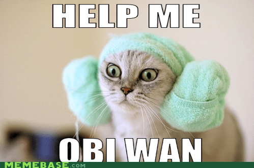 Cats leia meme cats Memes obi wan star wars - 5907524864
