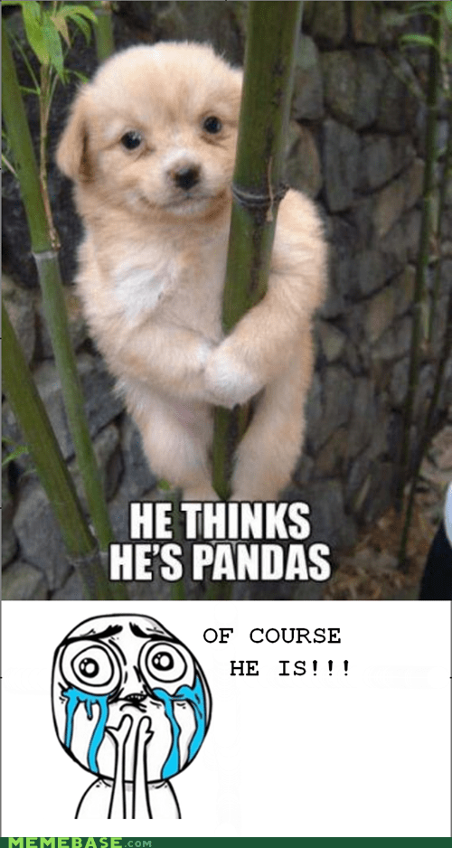 bamboo,cute,dogs,panda,Rage Comics