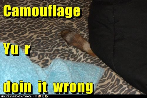 Cheezburger Image 5907630336