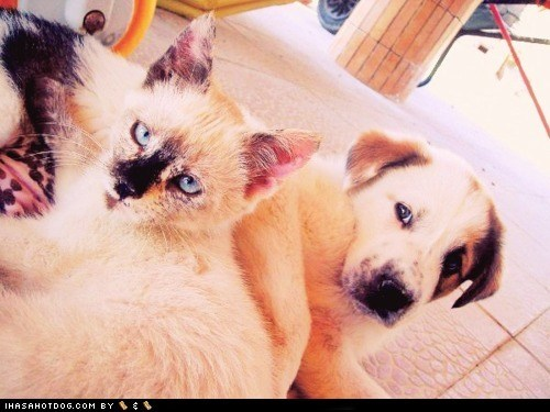 adorable cat friends kittehs r owr friends look a like whatbreed - 5907750400