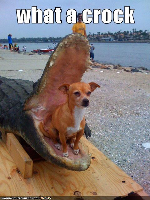 chihuahua stuffed crocodile What A Crock - 5907905024