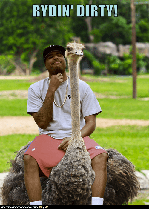 chamillionaire hip hop ostrich rap ridin dirty riding - 5908233472