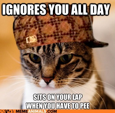 Cats ignore laps Memes pee Scumbag Cat scumbags timing - 5908270848