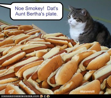 Cheezburger Image 5909044480