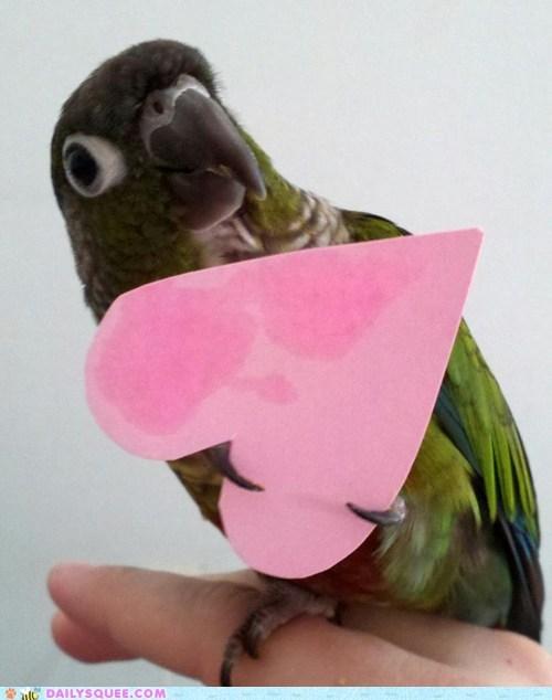 bird bud heart paper reader squees Valentines day - 5909055488