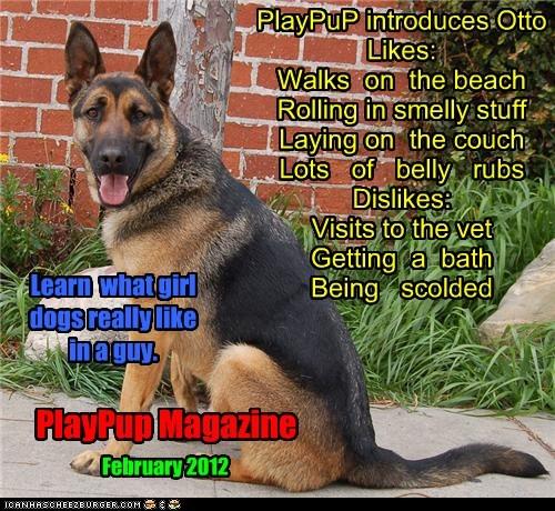 PlayPuP introduces Otto Likes: Walks on the beach Rolling in smelly stuff Laying on the couch Lots of belly rubs Dislikes: Visits to the vet Getting a bath Being scolded PlayPup Magazine February 2012 Learn what girl dogs really like in a guy.