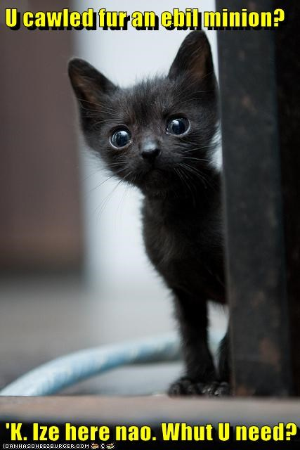 basement cat best of the week called evil for Hall of Fame here kitten minion present tiny