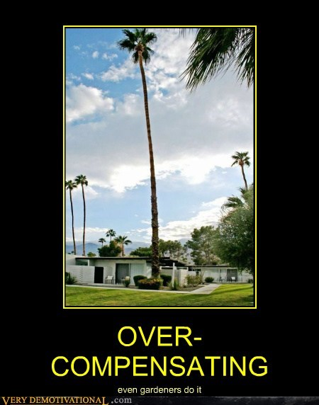 gardener hilarious over compensating Palm Tree wtf - 5910358016