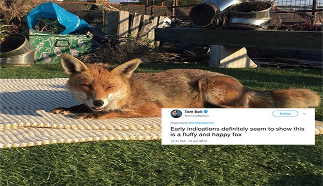 fox laying on a blanket enjoying the sun