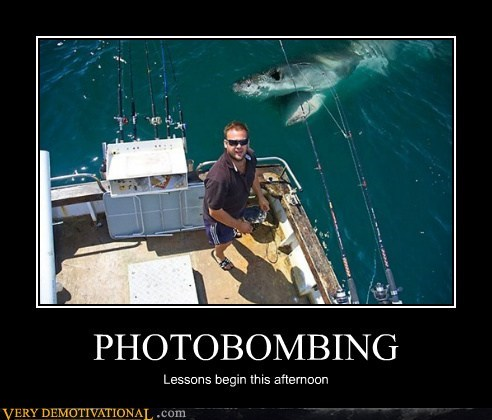 bizarre hilarious photobomb shark wtf - 5910621440