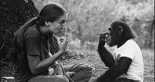 feelings expression chimp caretaker - 5910789
