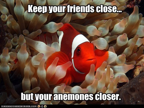 anemones,aquatic life,fish,good advice,keep your friends close but enemies closer,ocean,ocean life