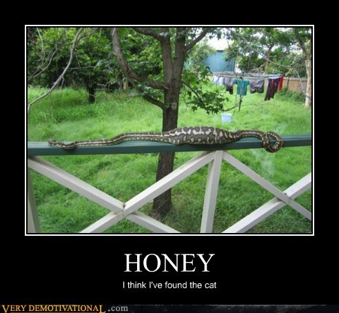 cat,honey,snake,Terrifying