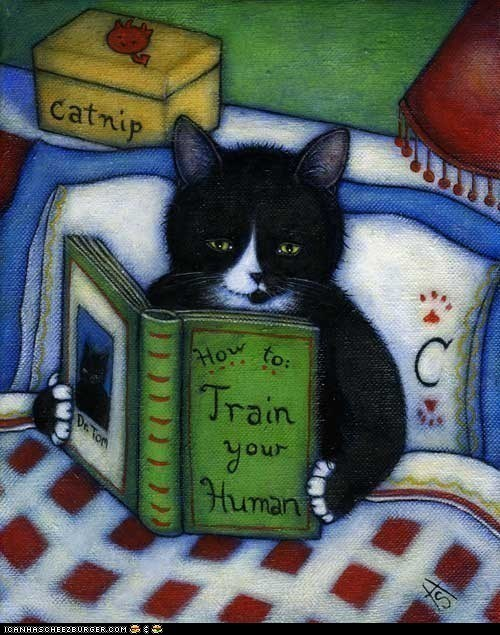 art books Cats cute drawings etsy reading train training - 5911388160