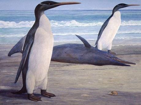fossil,Kairuku,Nerd News,penguin,prehistoric penguin,science