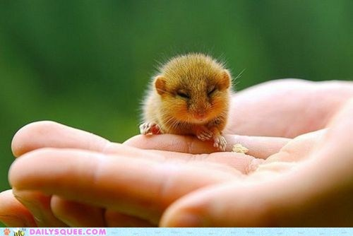 dormouse hand hibernate sleep sleepy