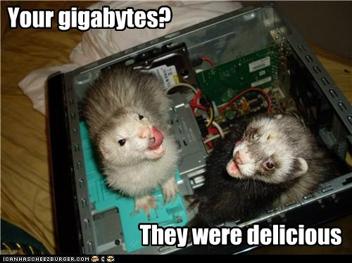 computer computer parts data delicious ferrets gigabytes hard drive tasty - 5911790080